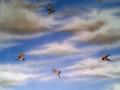 Wandmalerei mit Schwalben im Wolkenhimmel