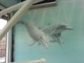 Tier und Jagdmalerei mit Delfinen