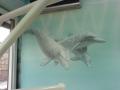 Wandmalerei, Tier und Jagdmalerei mit Delfinen