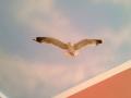 Deckenmalerei mit Möwe von unten im Wolkenhimmel