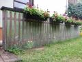 Bemalte Gartenwand mit Zaunkönig