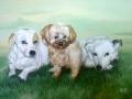 Portrait mit drei Hunden