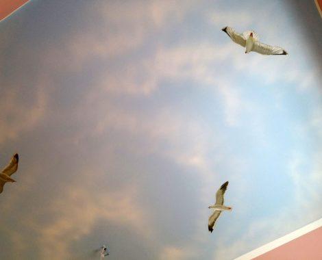 deckenmalerei moewen im wolkenhimmel